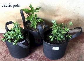 For plants, fabric pots are better than plastic bags and cement pots. South Africa, Pretoria east